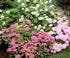 Jardin et Collection Annabelle dans le Jura