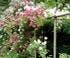 Jardin des Vieilles Vignes en Haute-Saône