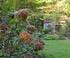 Mêmes sèches, les fleurs d'hydrangéas gardent toute leur beauté