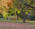 Feuillages d'automne colorés