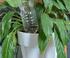 Arrosage plante d'intérieur avec bouteille renversée