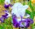 Plume bleue fleurie