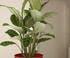 Plante verte dans un bac à réserve d'eau