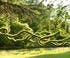 Sylphes à Chaumont-sur-Loire