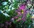 L'arbre aux fruits célestes à Chaumont sur loire
