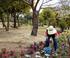 Jardinier au Japon