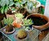 Collection de plantes au Japon