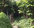 Jardin Agapanthe en Normandie