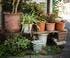 plantes sauvages et plantes cultivées dans un jardin de pots