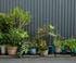 Jardin de pots tout en longueur