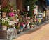 Jardin de géraniums en pots à Tokyo