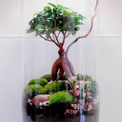 terrarium humide