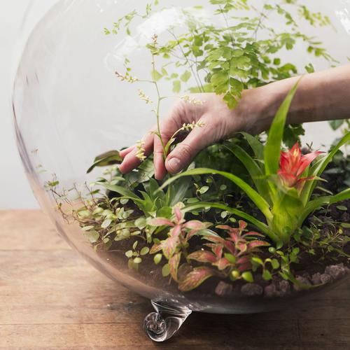 terrarium dans un bocal
