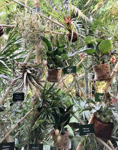 Les plantes épiphytes s'exposent au jardin des Plantes à Paris