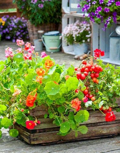 Planter une jardinière gourmande
