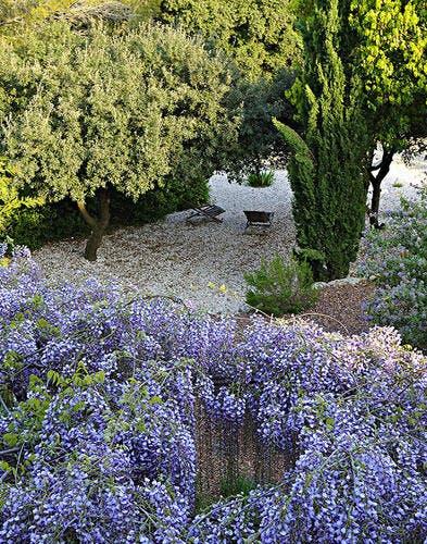 Floraisons printanières dans un jardin méditerranéen