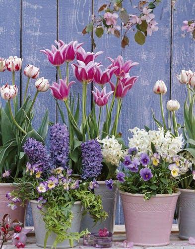 Bulbes de printemps en pot : 5 idées d'association