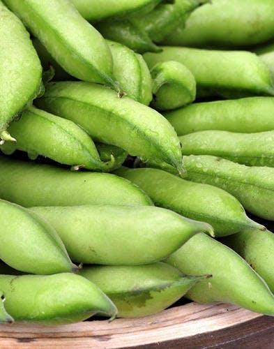 Fiche pratique : la fève