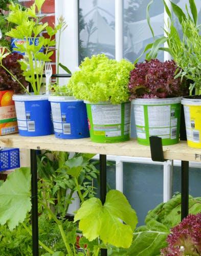 Comment planter des salades en pot ?