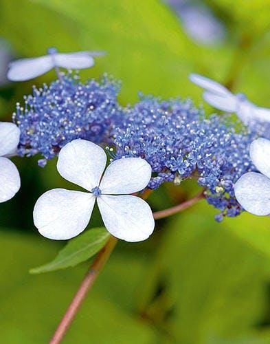 20 plantes faciles à entretenir toute l'année !
