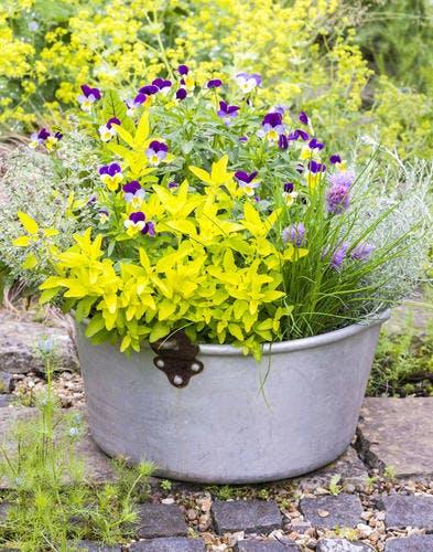 Associez aromates et fleurs comestibles dans une bassine