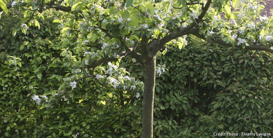 Arbres fruitiers au jardin