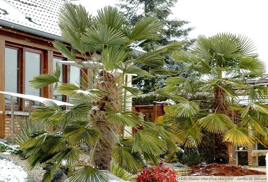 57-jardinbellone_8mars16.jpg.jpeg