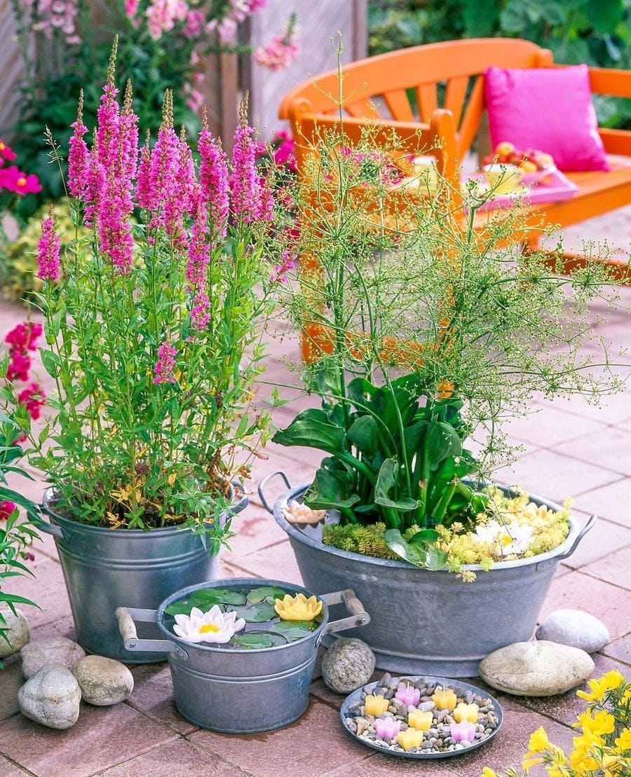 Plantes De Terrasse Arbustes 3 jardinières de terrasse pour plantes aquatiques | détente