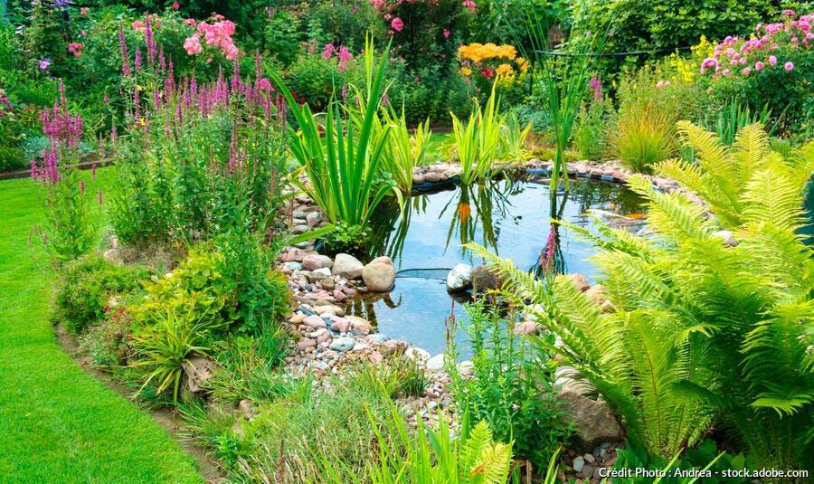 Mare bassin dans un jardin