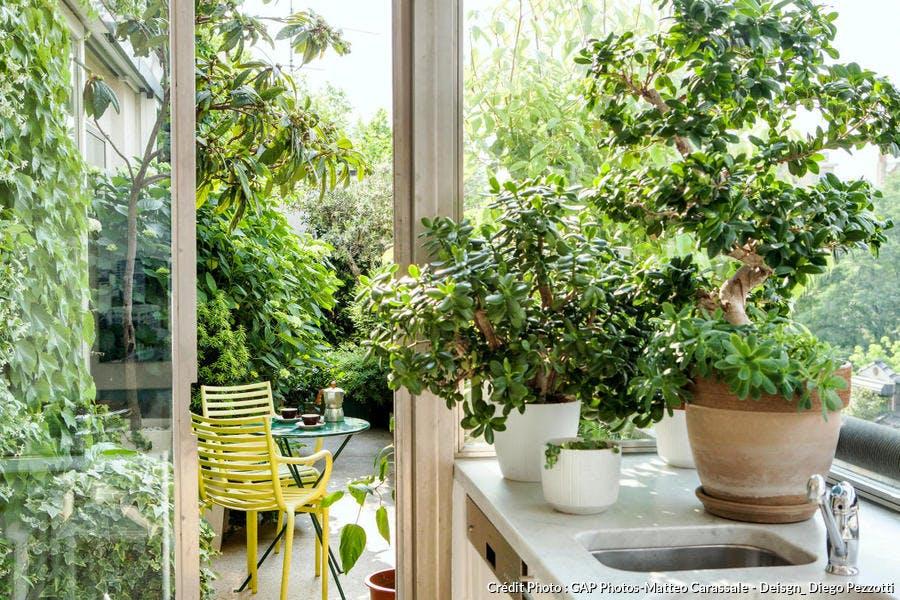 Aération plantes intérieur
