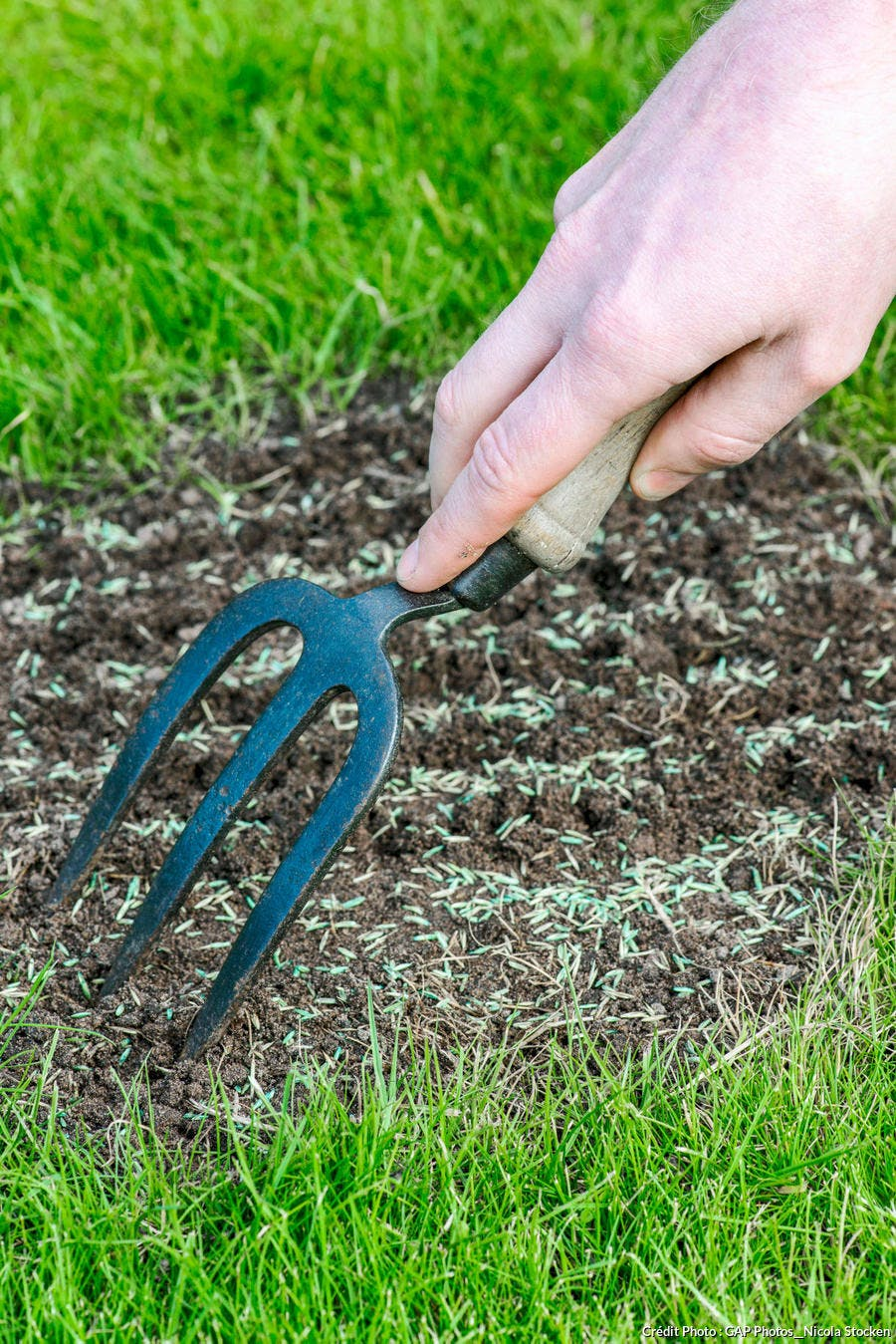 combler trous pelouse