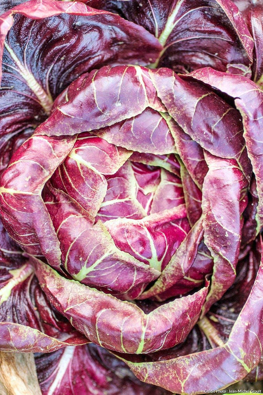 Chicorée rouge de Trevise