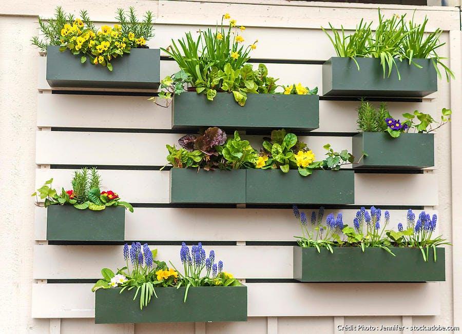 Mur fleuri pot printemps