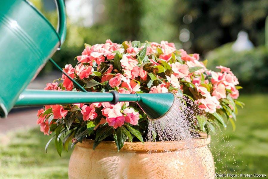 Arrosage pot de fleurs
