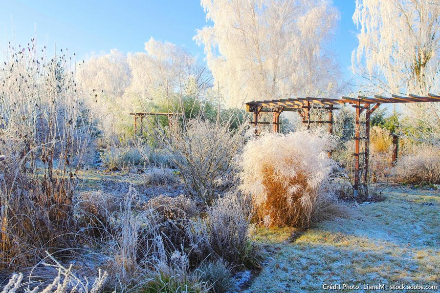 Jardin hiver givre neige