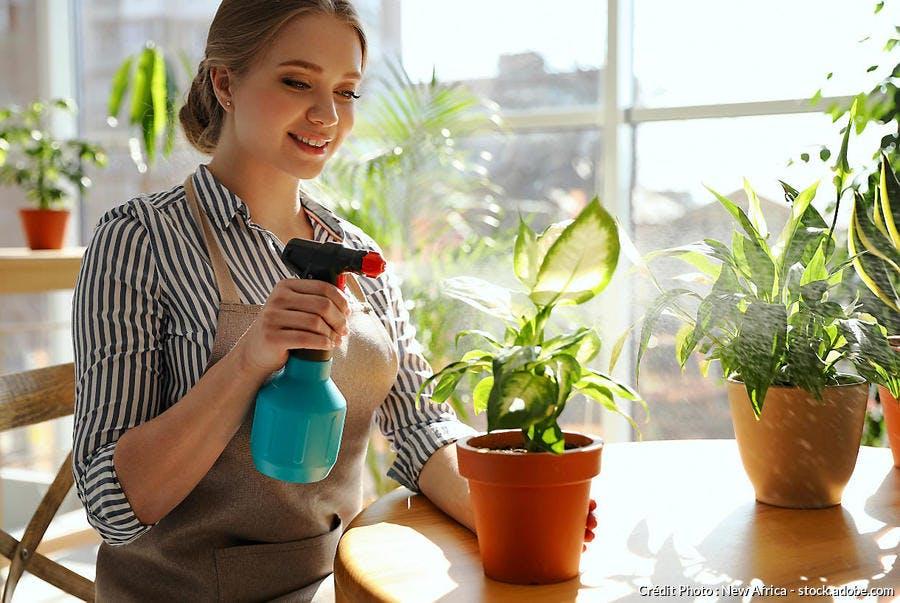 vaporiser plante d'intérieur