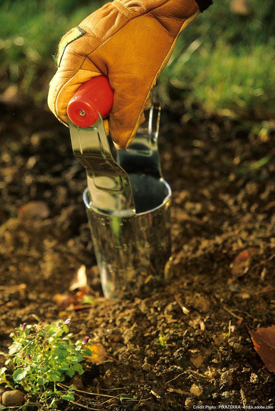 Plantoir bulbe