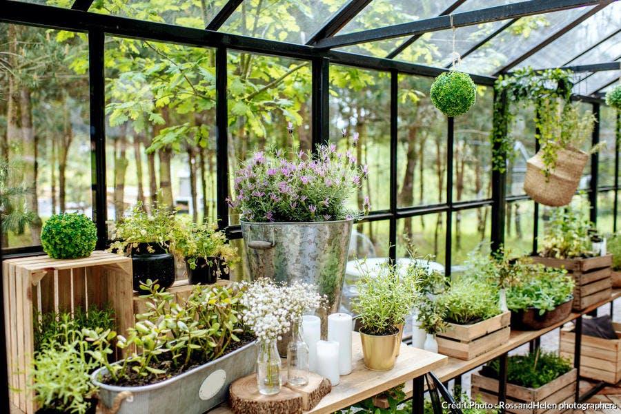 véranda plantes