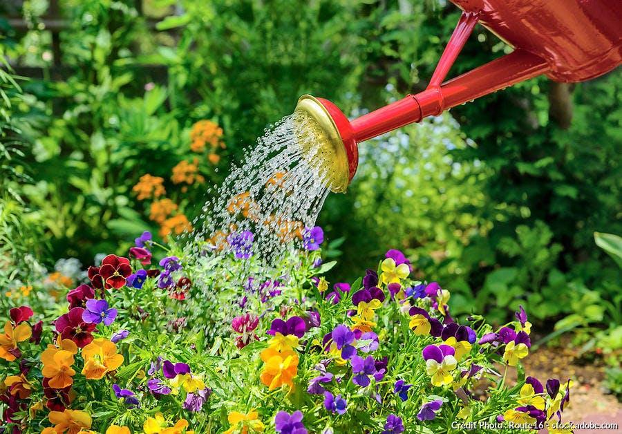 Arrosoir fleurs