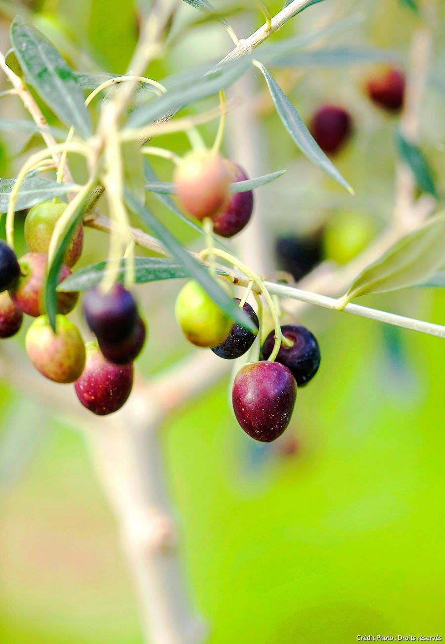Olives mûres noires