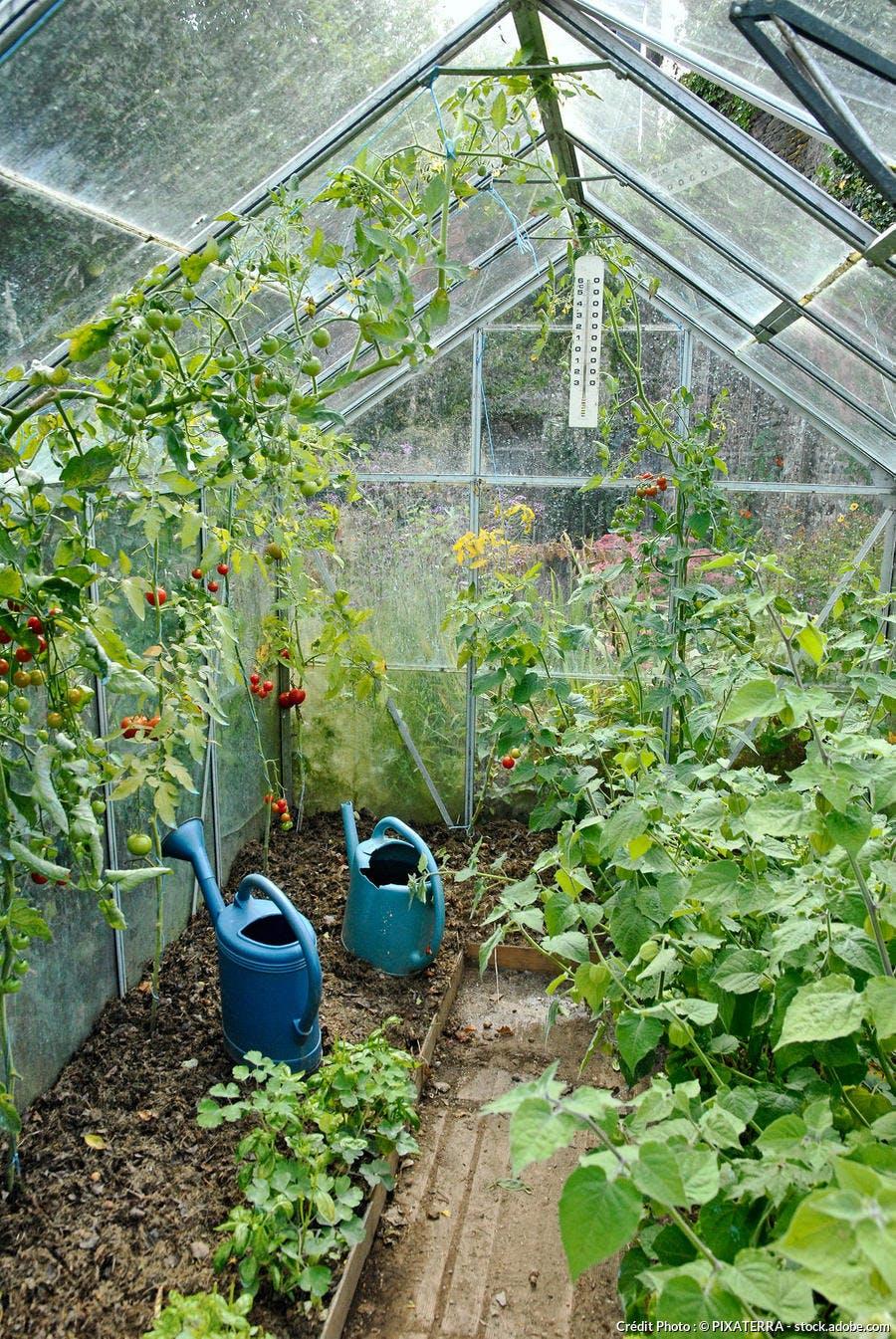 Que Planter En Octobre Sous Serre 7 secrets pour réussir la culture des tomates ! | détente jardin