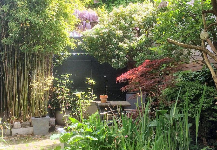 Erable japonais à l'entrée du jardin
