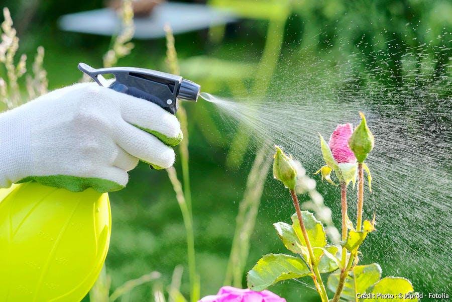 Insecticide naturel et biologique