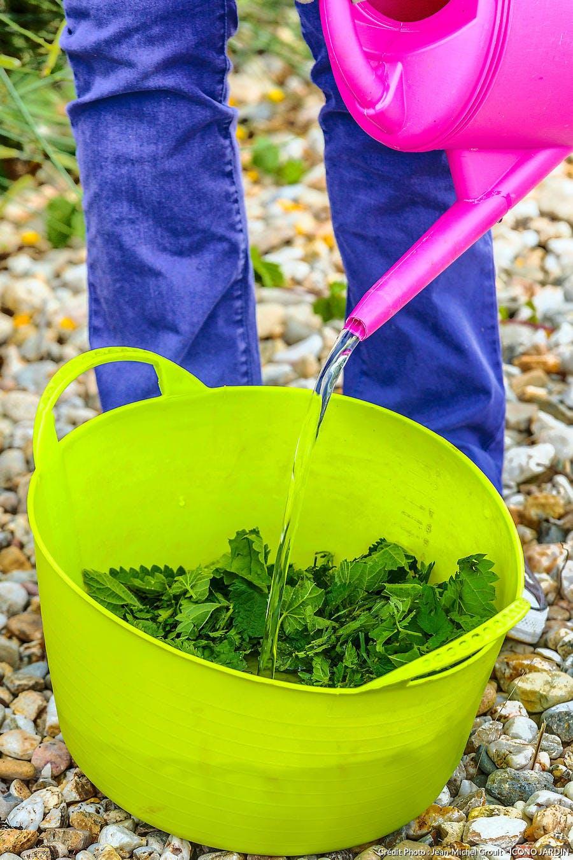 Purin d'ortie en fertilisant naturel