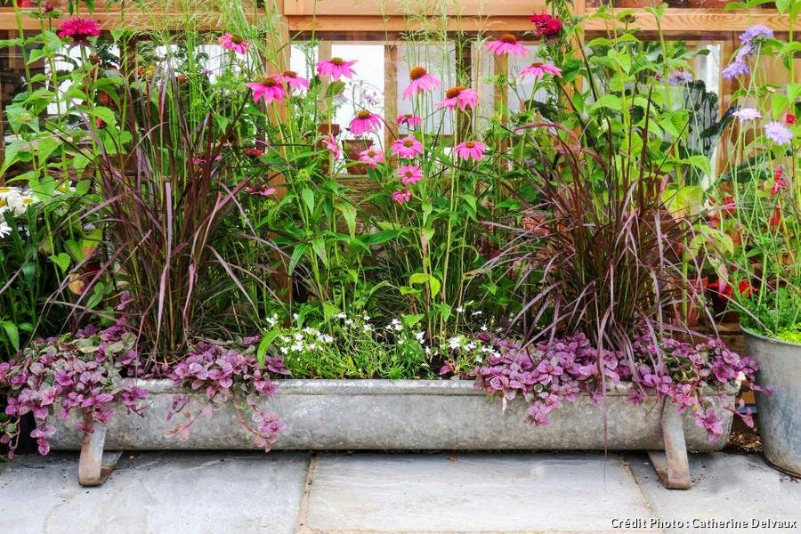 Contenants originaux pour plantes de petit jardin