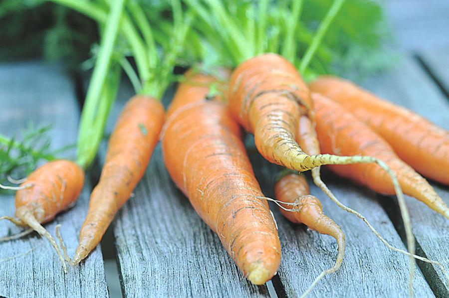 carotte cultivées avec la lune