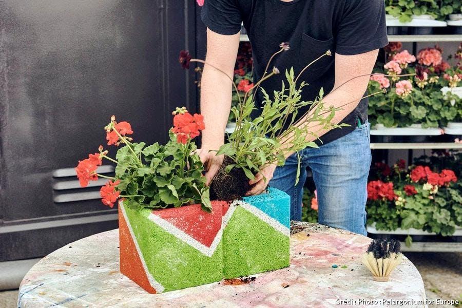 Jardinière de géraniums fait maison