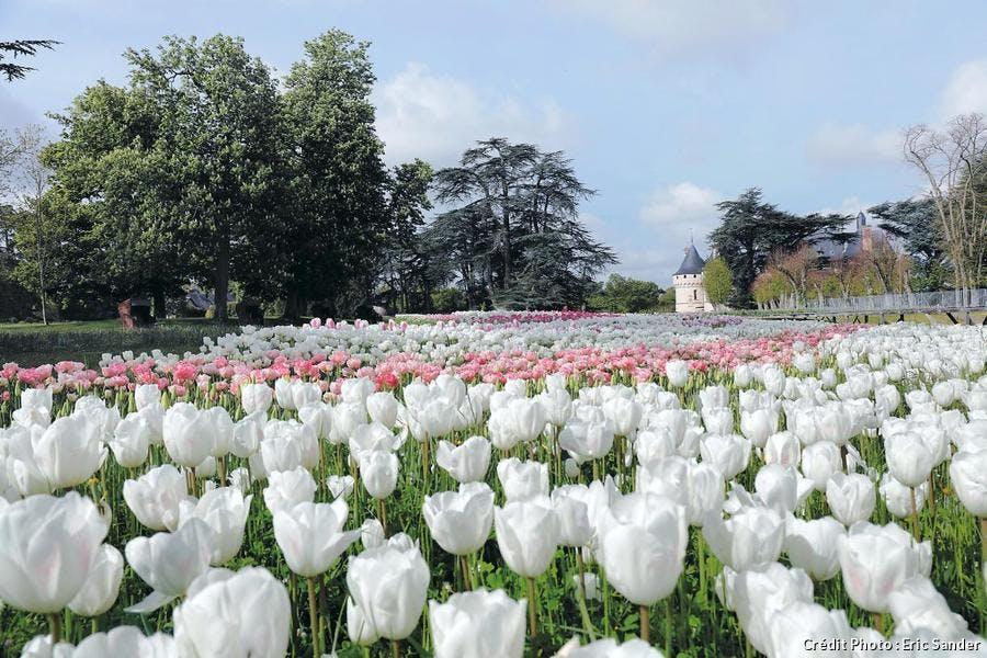 rivière de tulipes chaumont sur loire