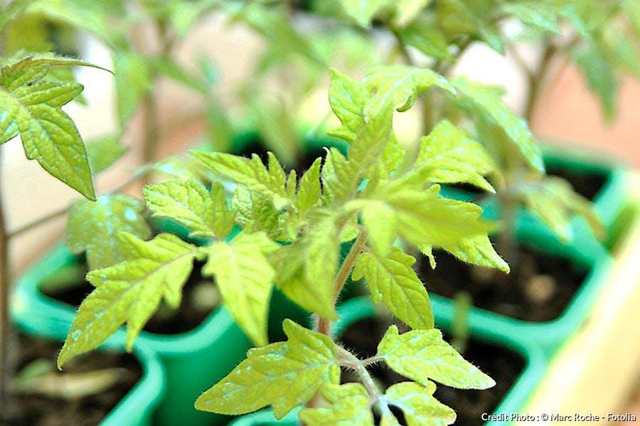 Plants pour potager rapide