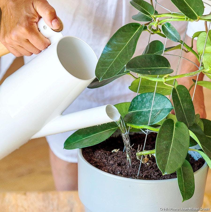 Arroser des plantes d'intérieur